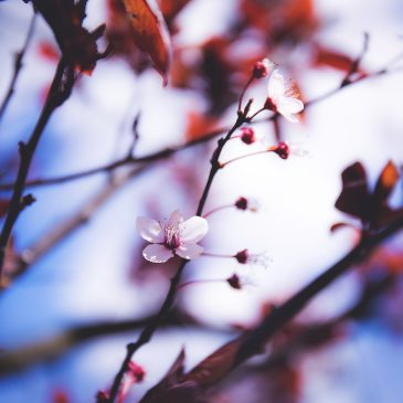 Pasitik pavasarį!