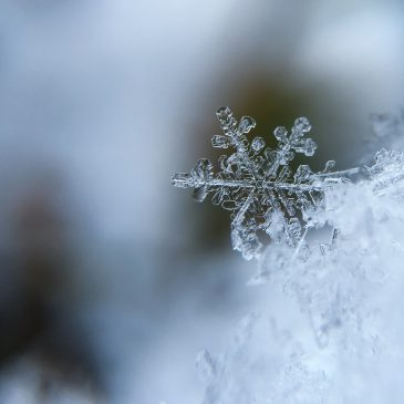 Žiemos šventės jau čia!